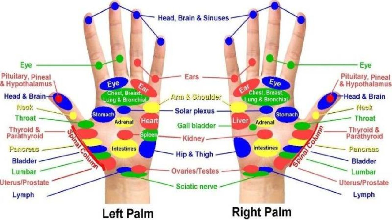 Acupuncture Points Chart For Back Pain - Reviews Of Chart