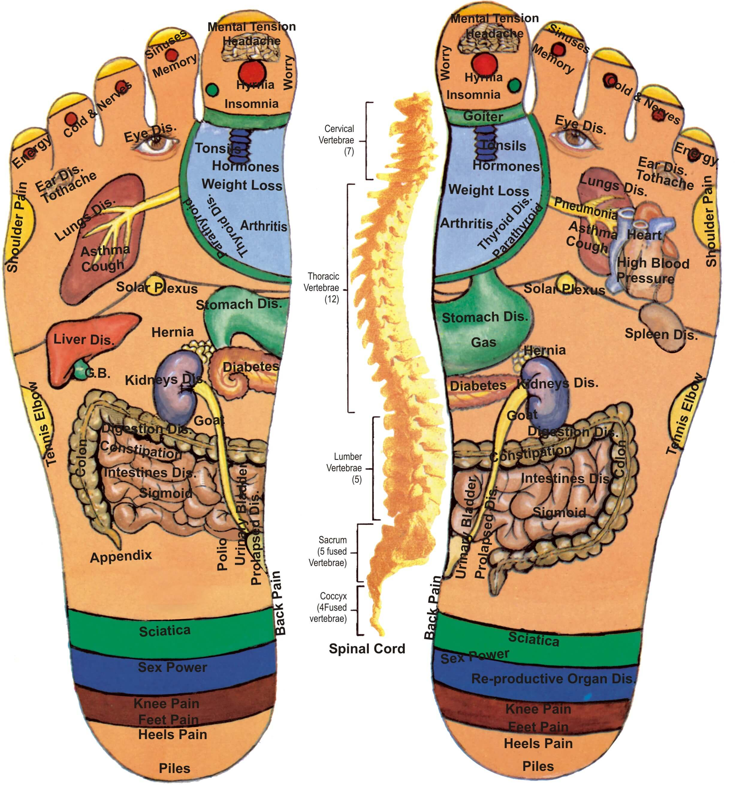 Foot Acupressure Points for Burning Feet & Ailments in the ...